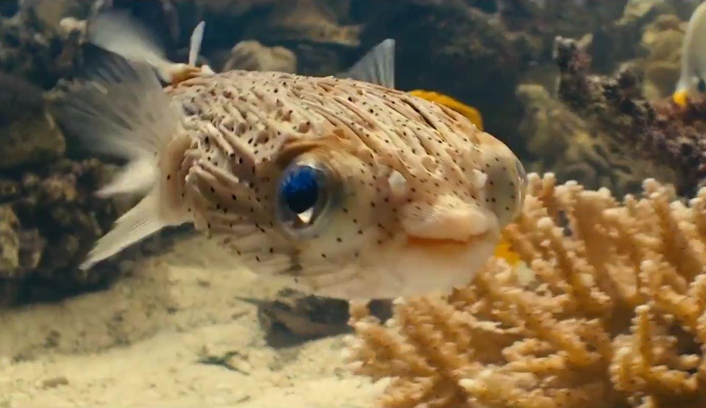 Film sequences poisson porc epic