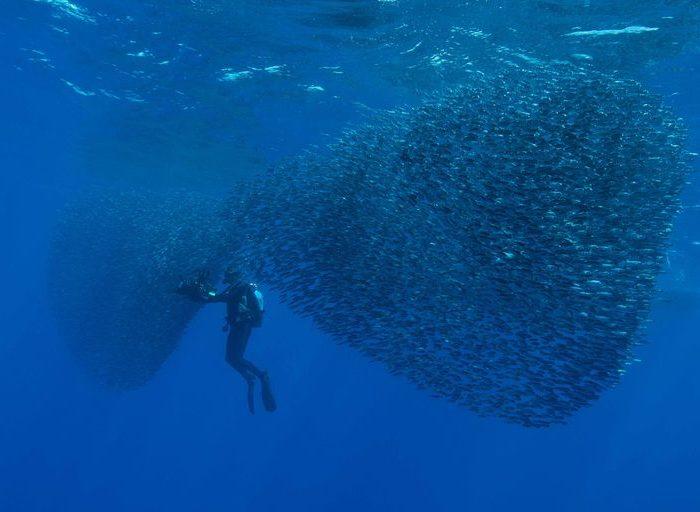 Banque d'images film sous-marins