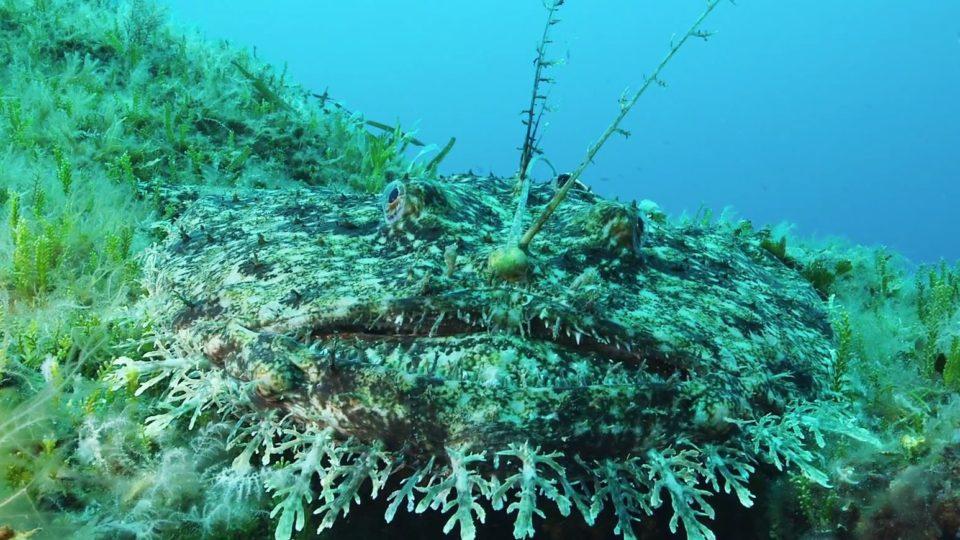 Un océan de vie, la baudroie