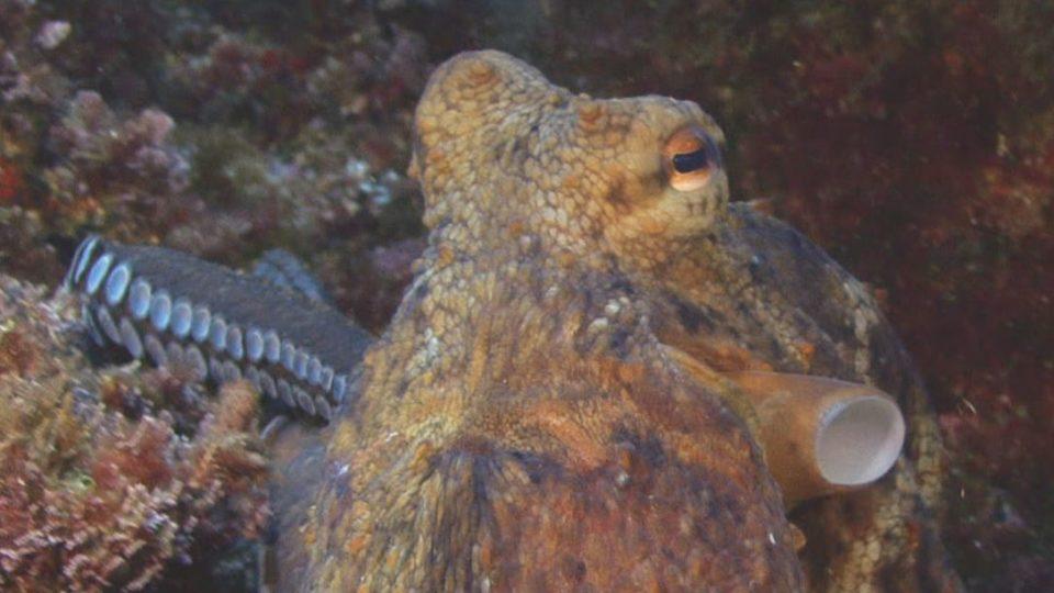 Un océan de vie, le poulpe