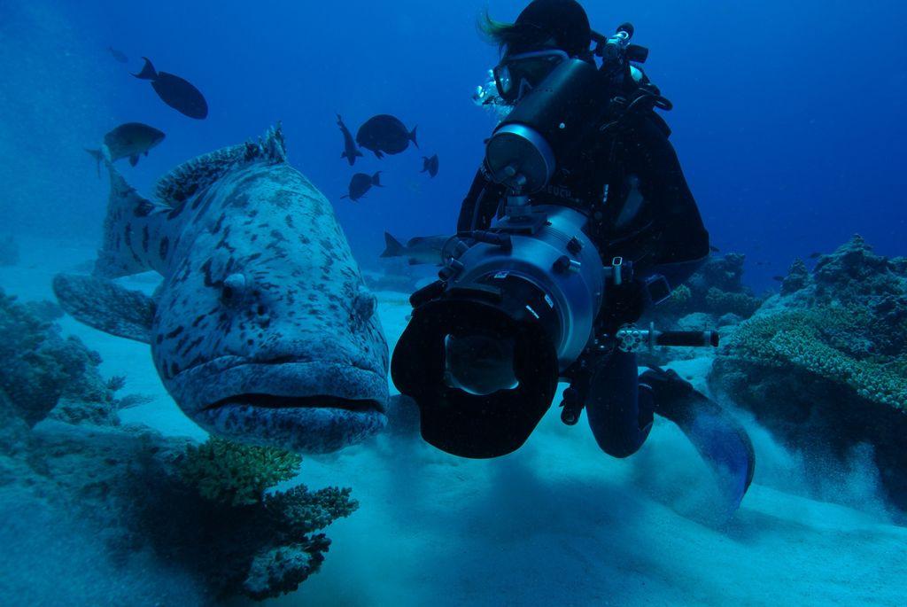LaBel Bleu Production - Réalisation vidéo sous-marine - Voyages d'aventures