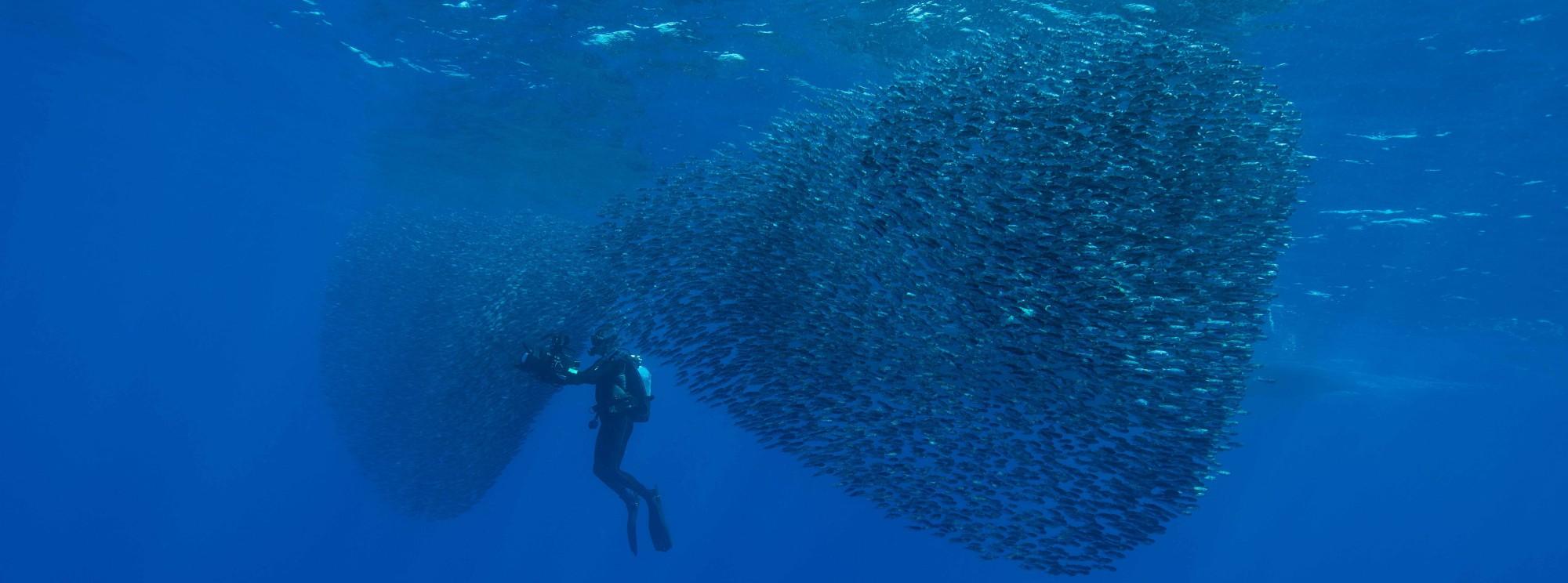 Rene heuzey underwater cinematographer