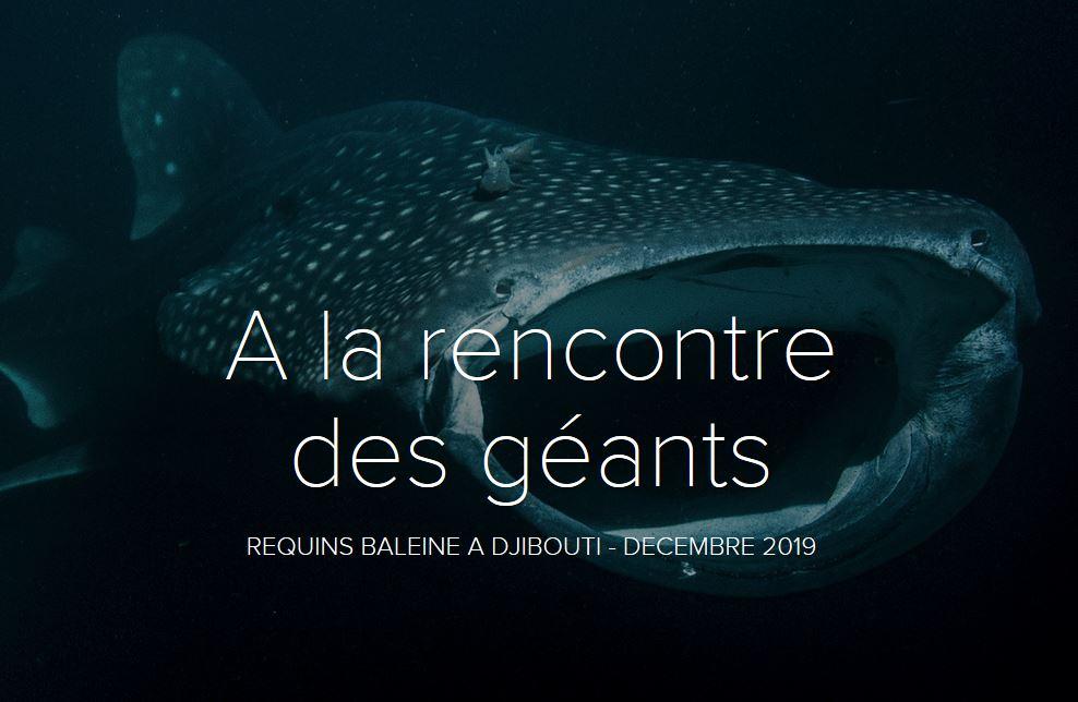 Voyage plongéer requins baleine