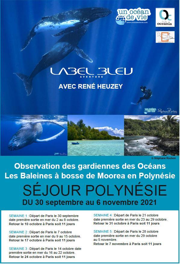 Voyage plongée baleines Moorea Label Bleu Aventures René Heuzey